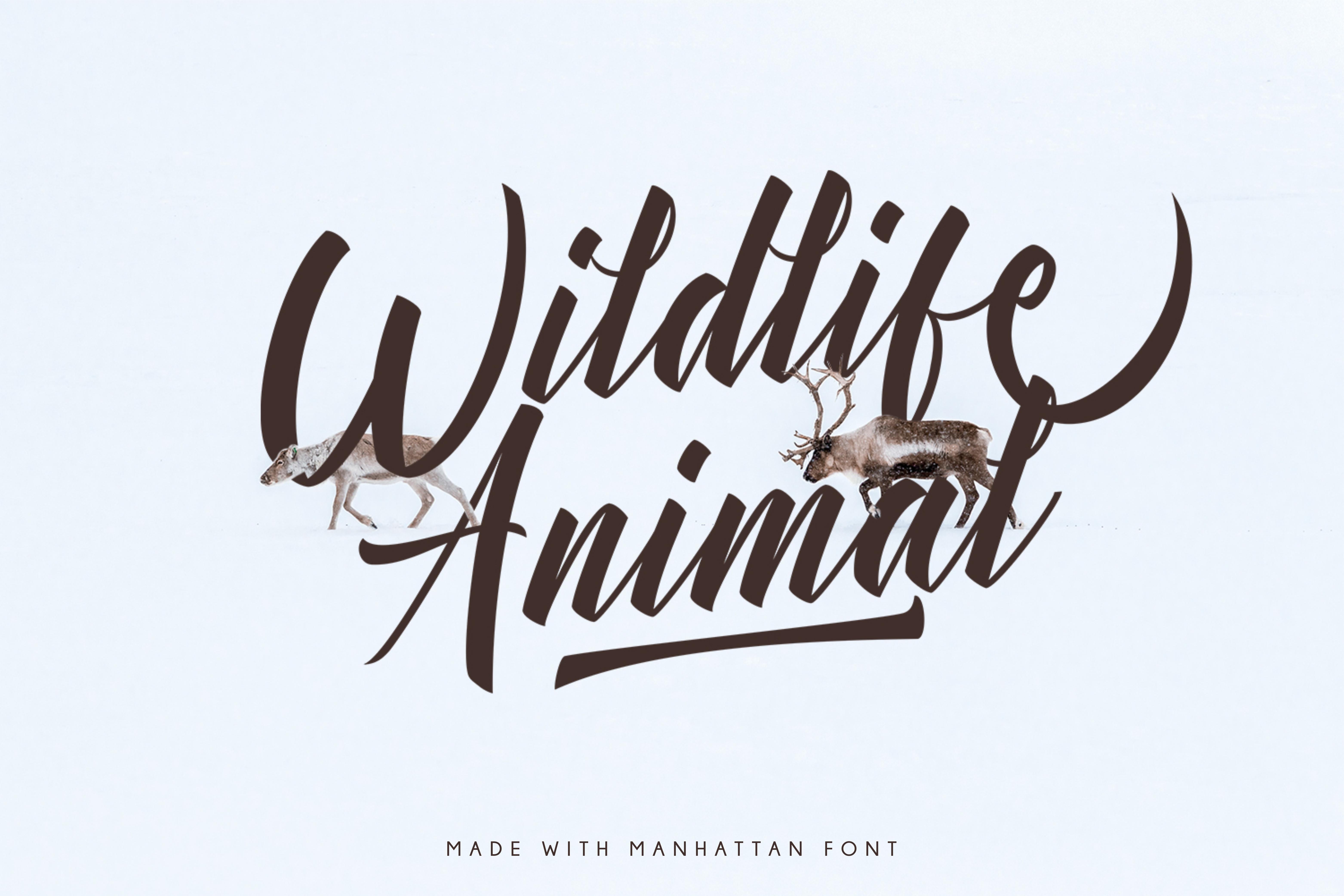 Manhattan Brush Script Font Swash example image 8