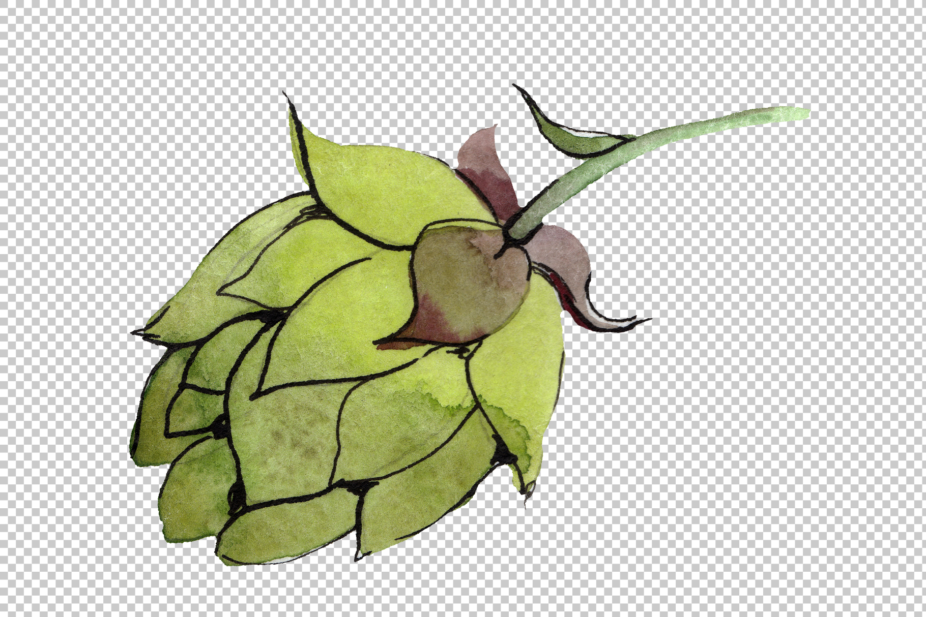 Green watercolor hops png set example image 3