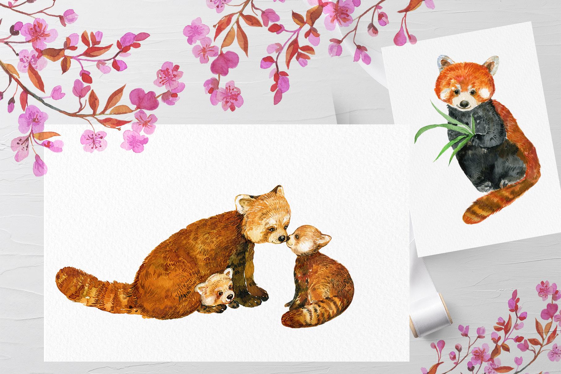 Red Panda ,watercolor illustrations example image 8