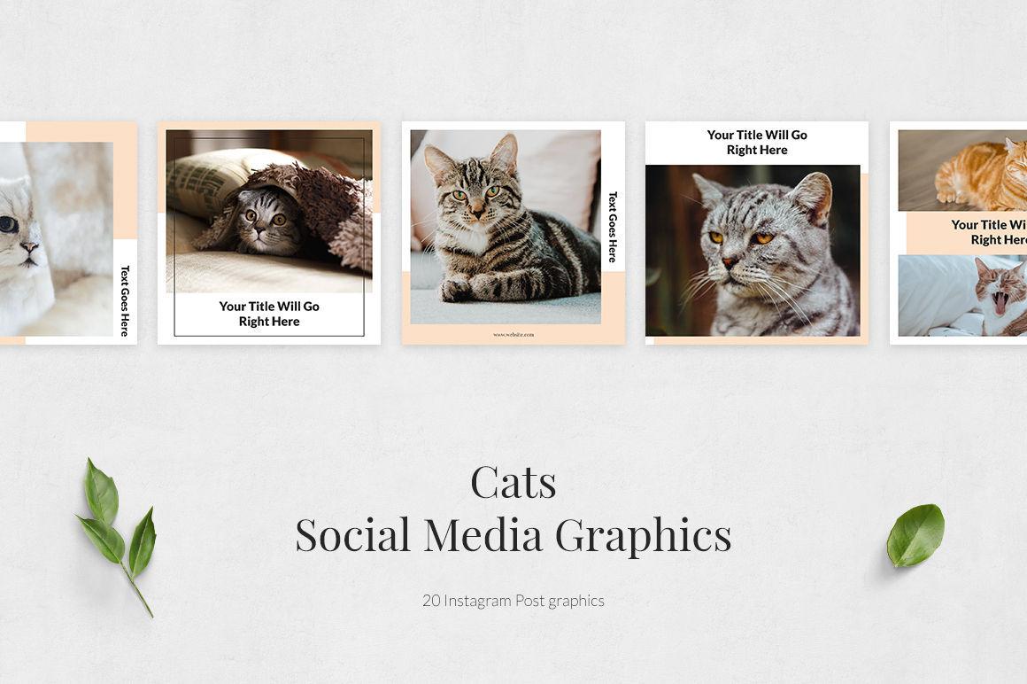 Cats Instagram Posts example image 2