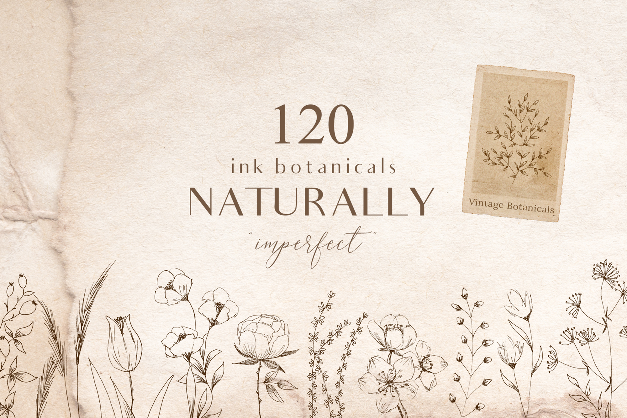 Ink Botanicals Vintage Wildflowers Ink Botanicals Vintage example image 1