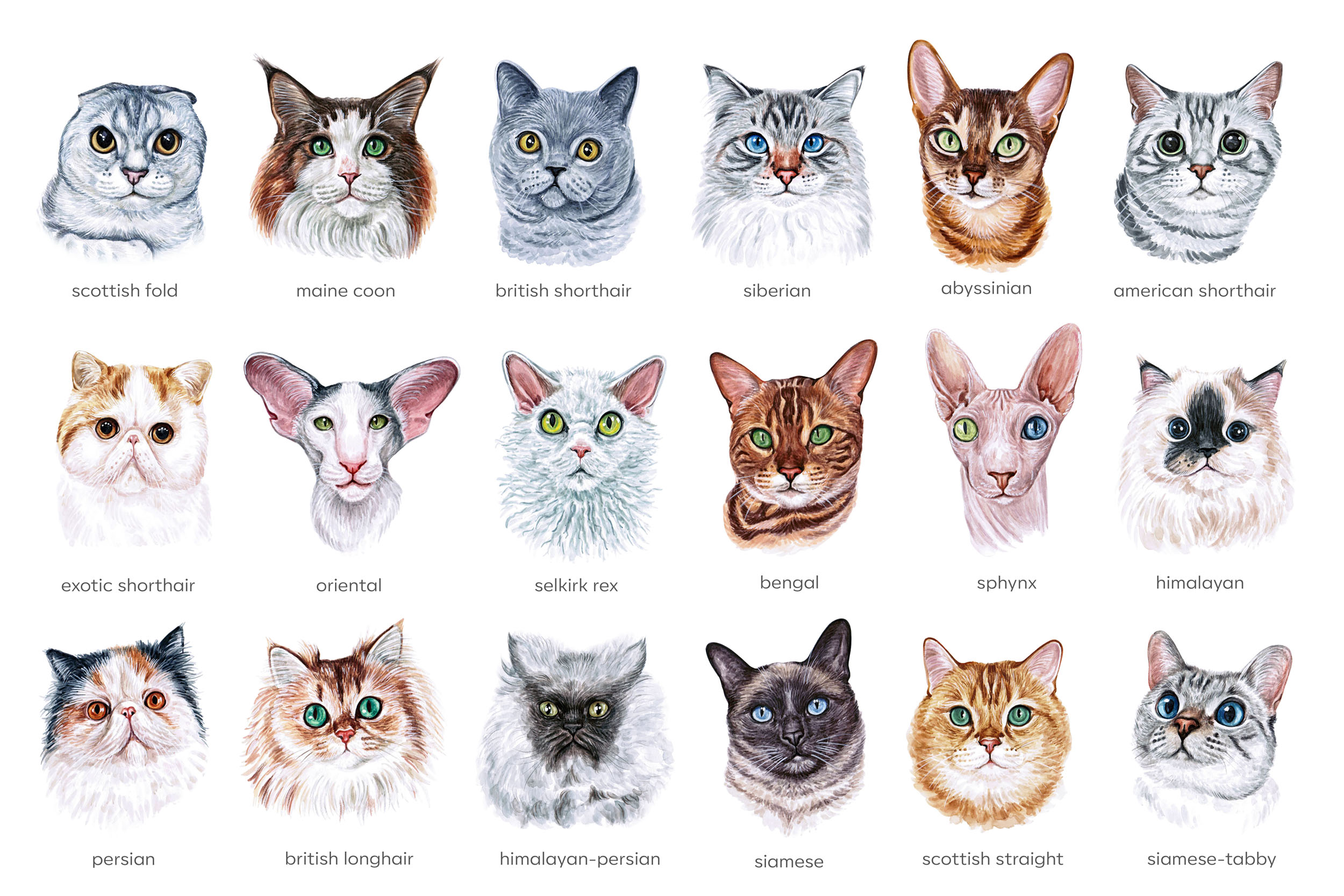 Watercolor 18 cat breeds illustrations. Cute cat. Meow. example image 2