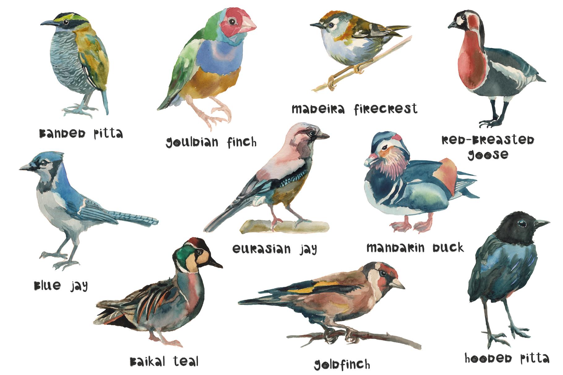 Beautiful birds example image 2