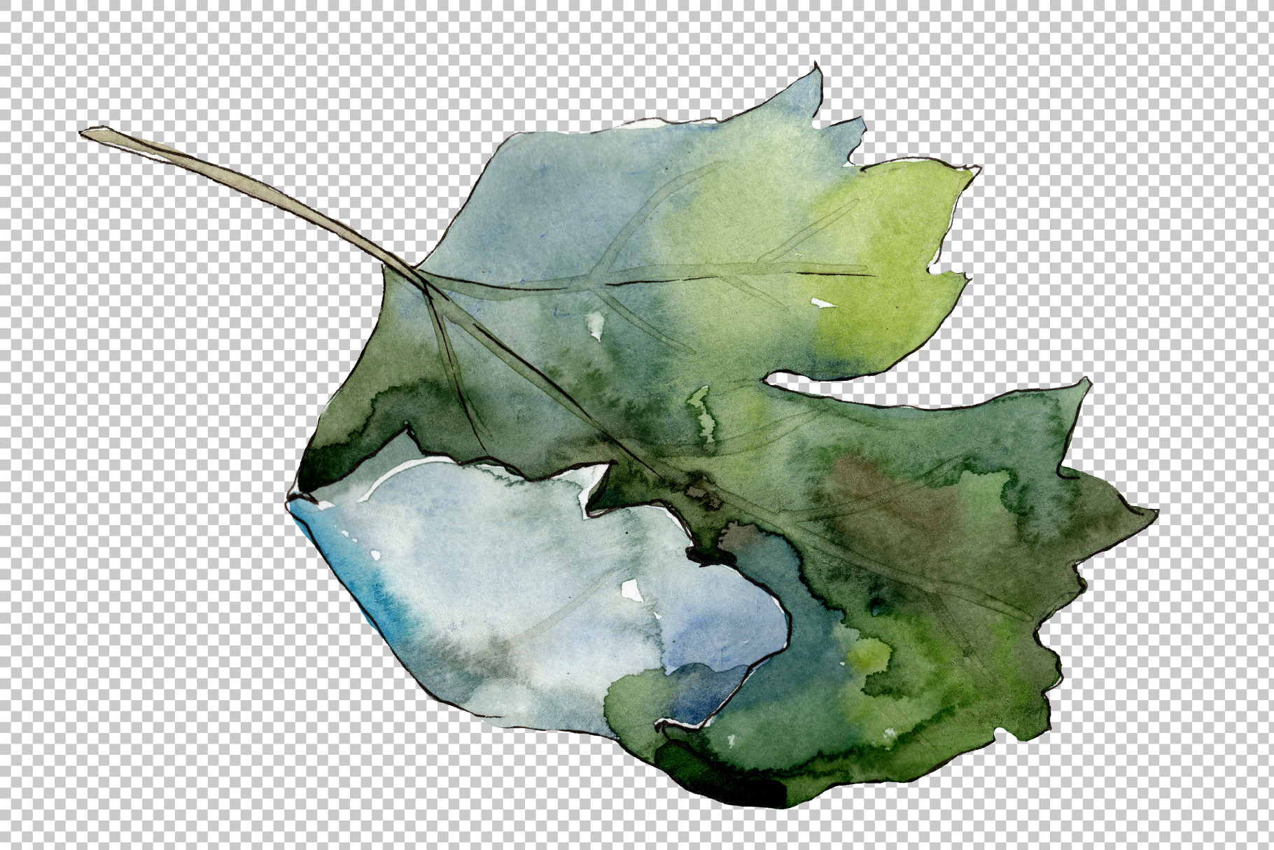Gooseberry PNG watercolor plant set example image 6