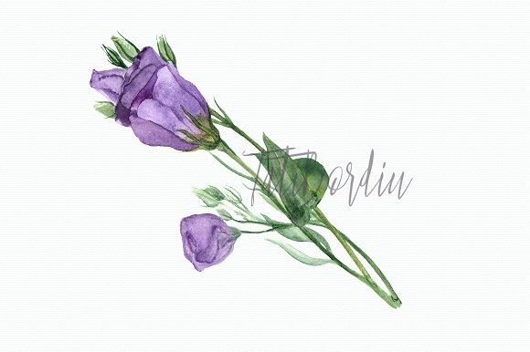 Eustoma Clip Art Set + Wreath example image 3