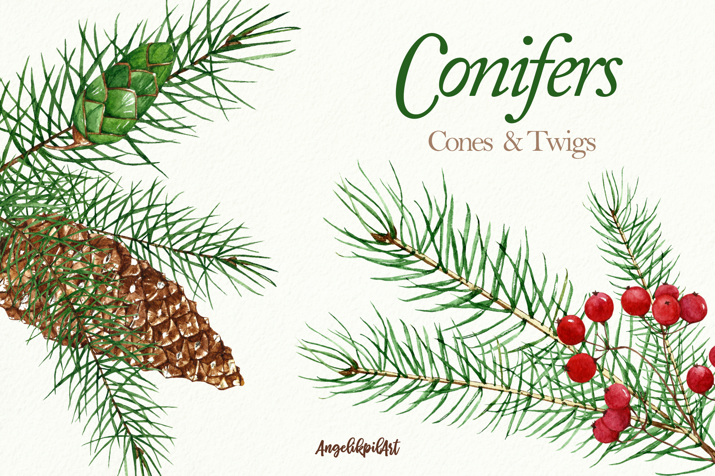 Conifers. Cones&Twigs watercolor example image 5
