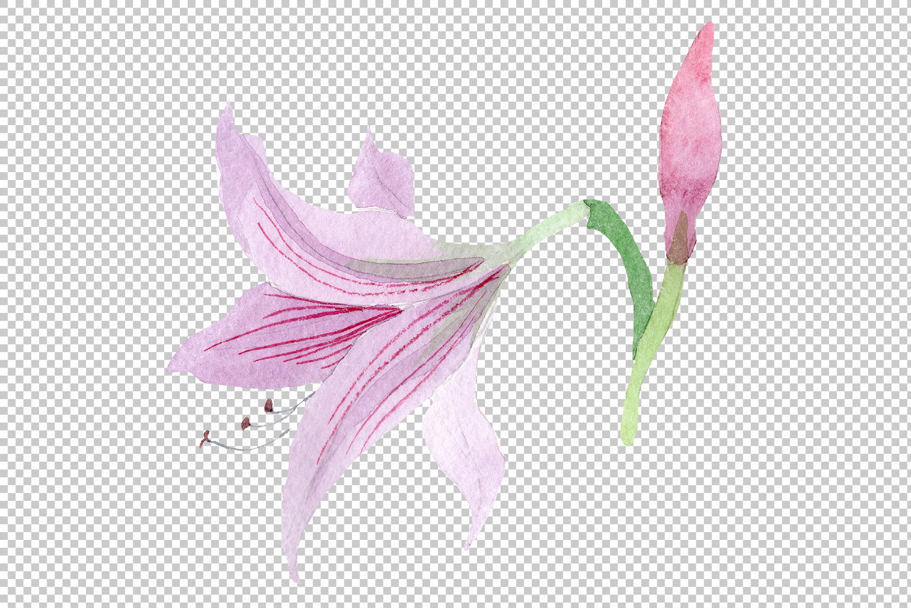 Purple amaryllis PNG watercolor flower set example image 5