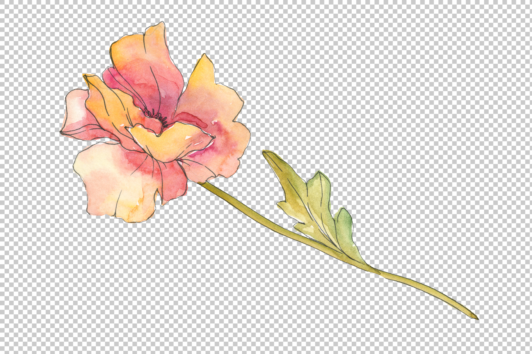 Poppy red Watercolor png example image 6