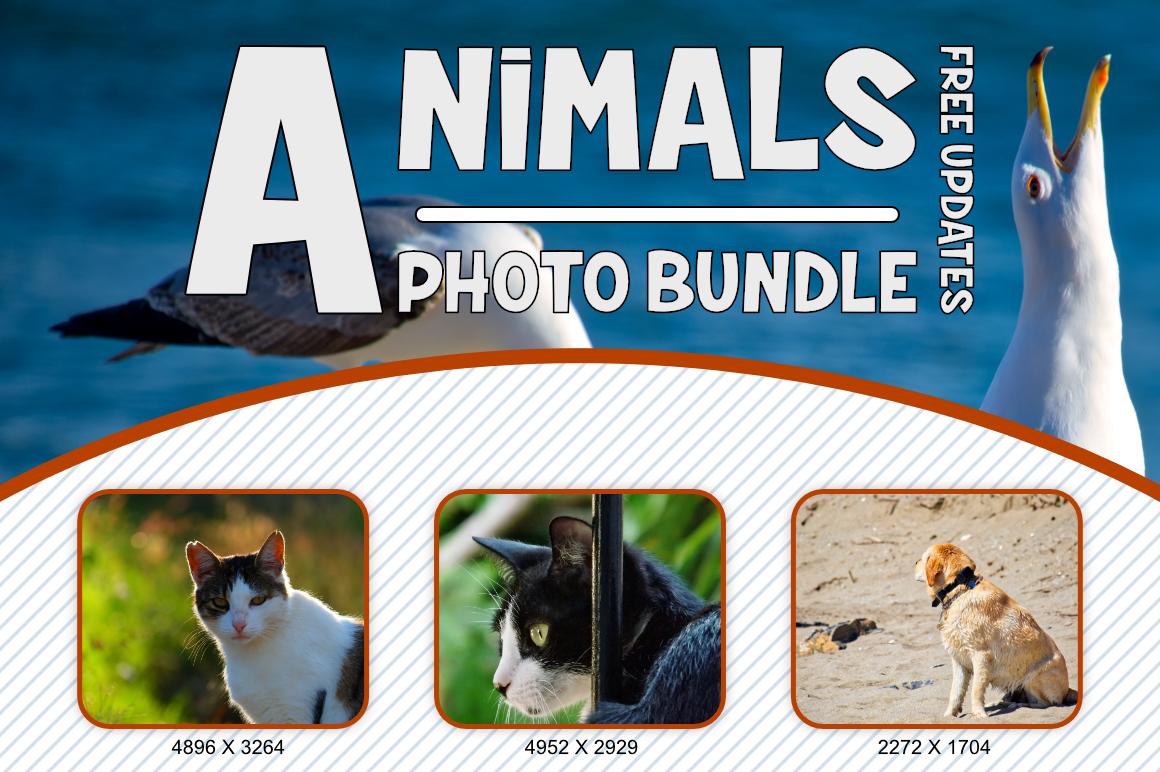 Animals Photo Bundle example image 2