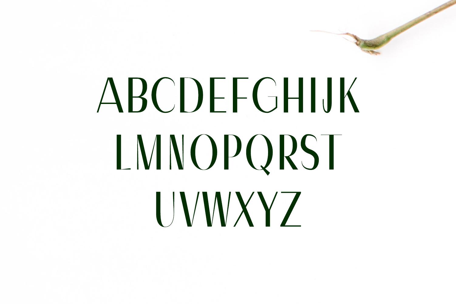 Severn Sans Serif Font Family example image 2