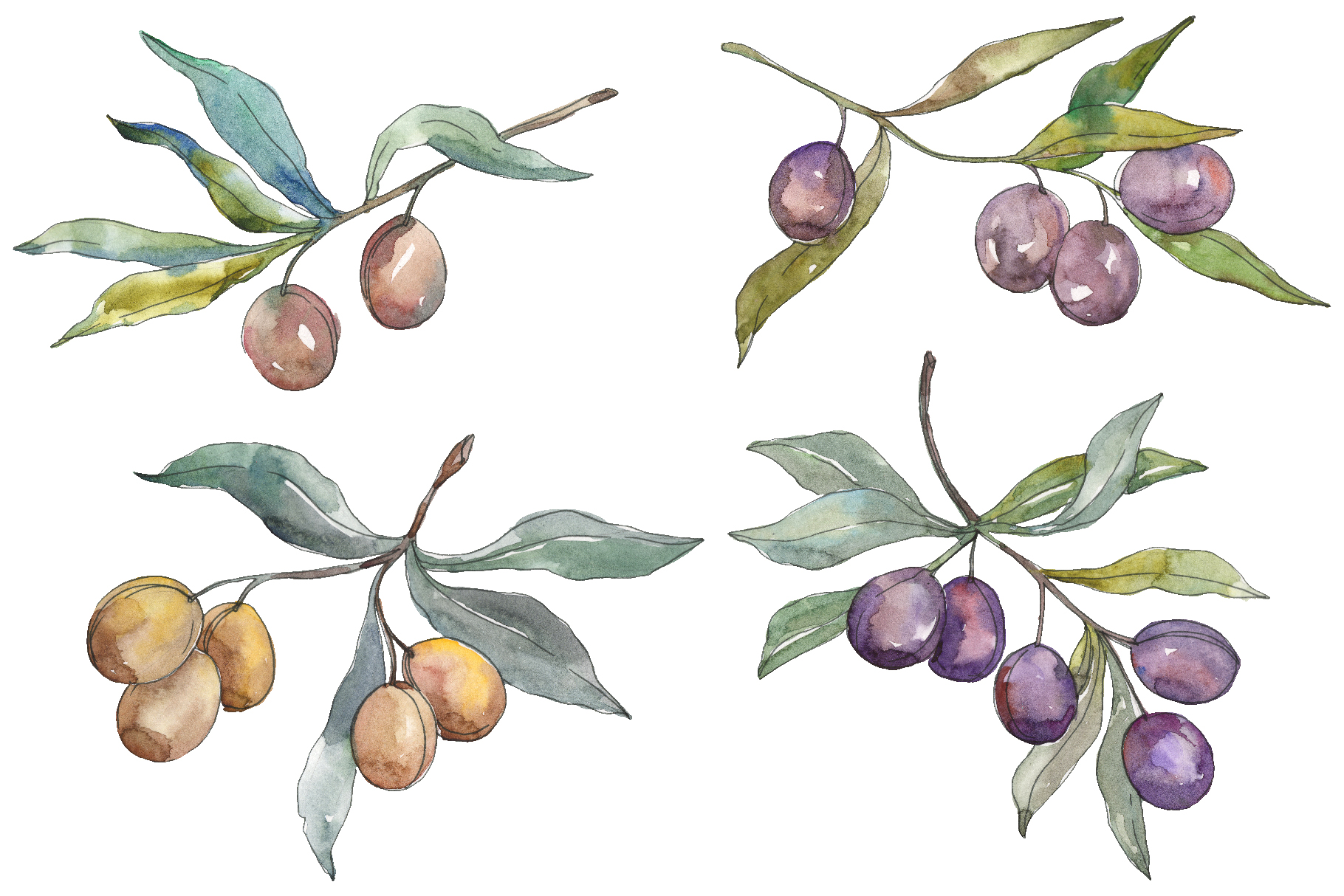 Olives 2 Watercolor png example image 1