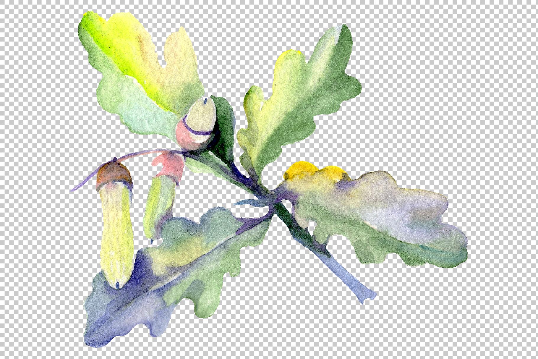 Acorn Watercolor png example image 11