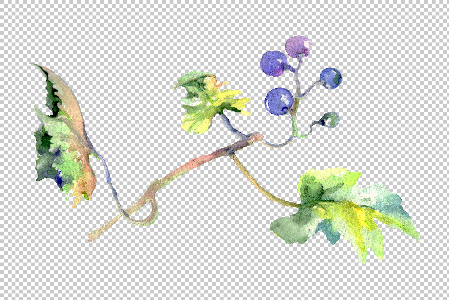 Grapes Watercolor png example image 10