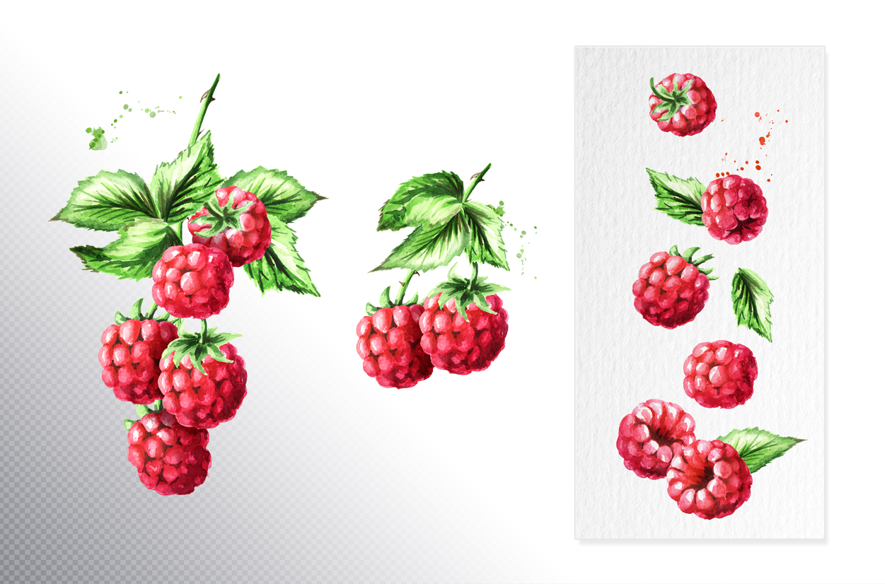 Raspberry. Watercolor collection example image 3