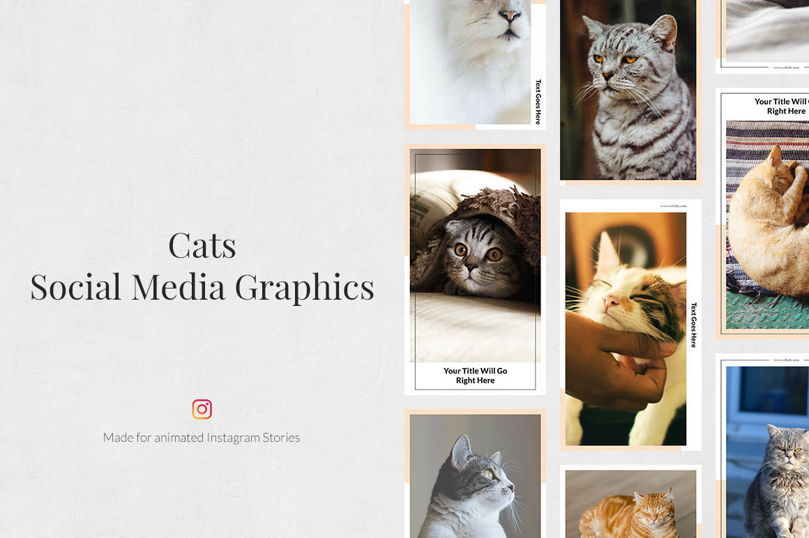Cats Animated Instagram Stories example image 1