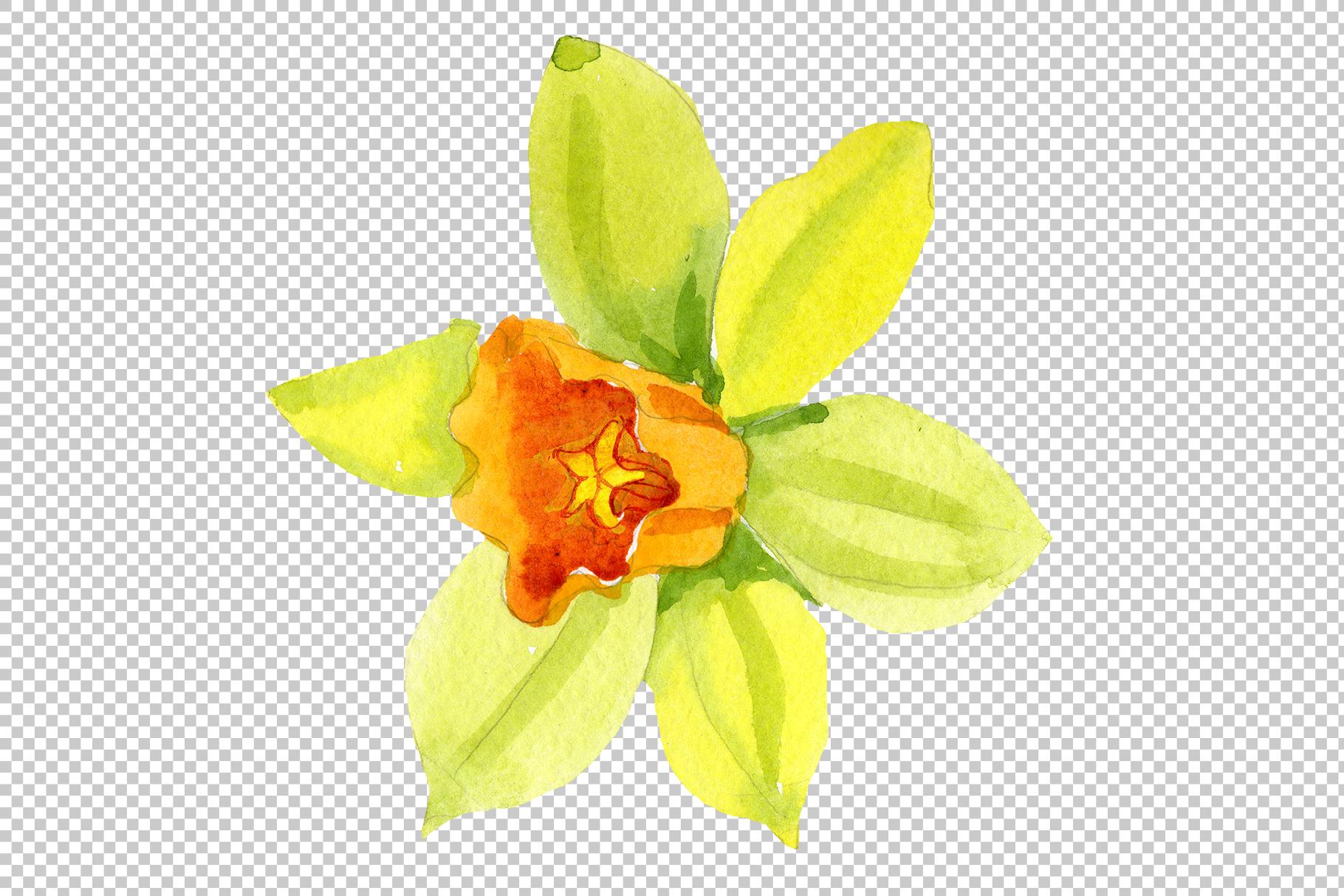 Narcissus lemon flower PNG watercolor set example image 2