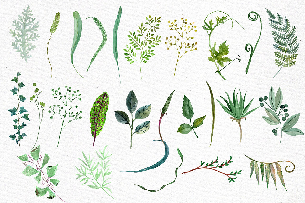 Watercolor Ferns Clipart example image 2