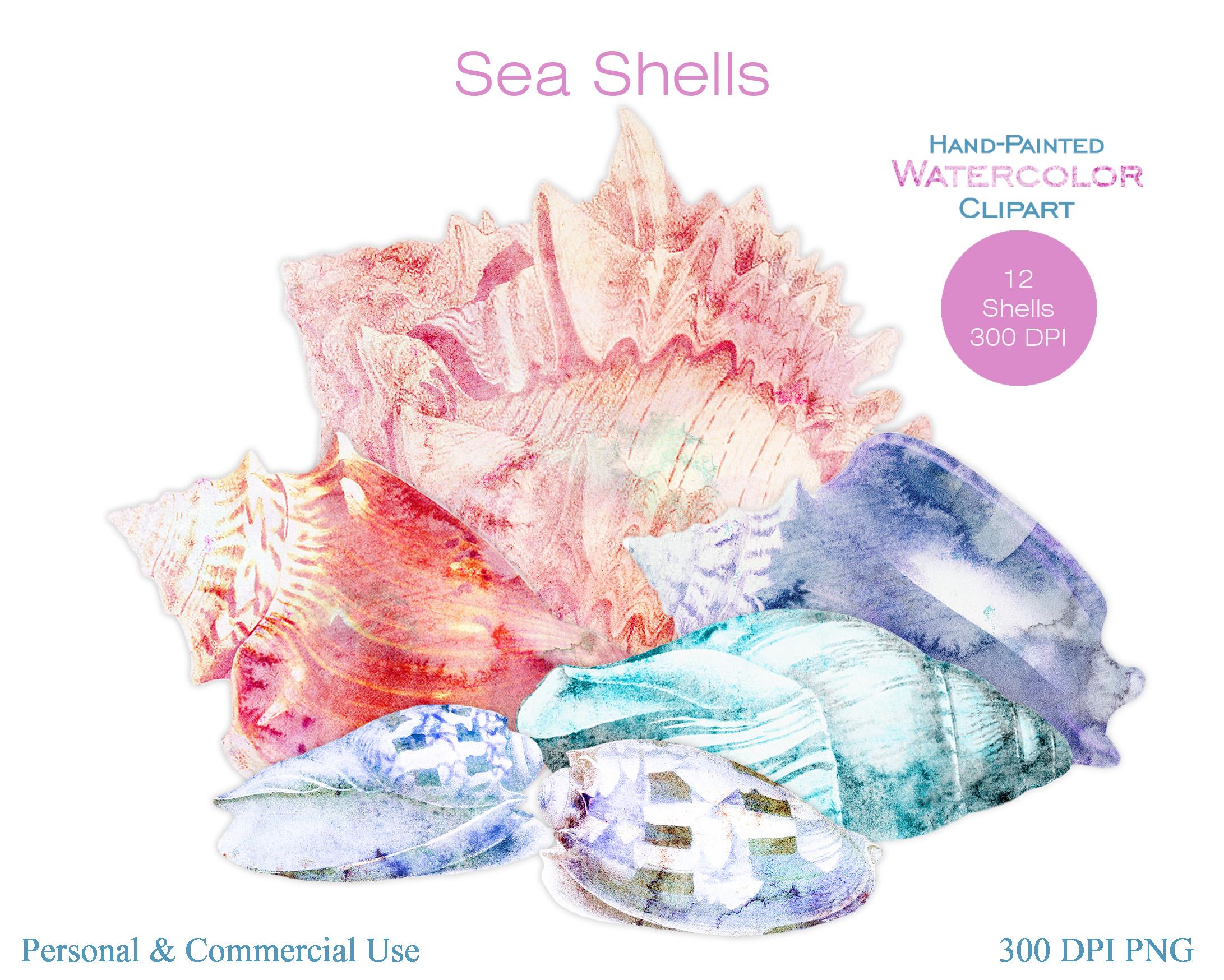 Beach Seashells Ocean Shells Clipart example image 3