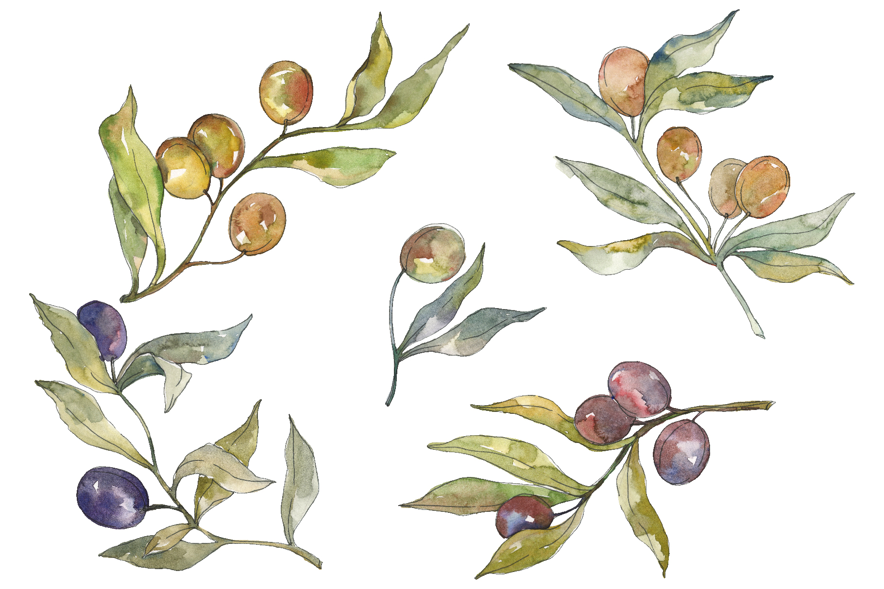 Olives Watercolor png example image 1