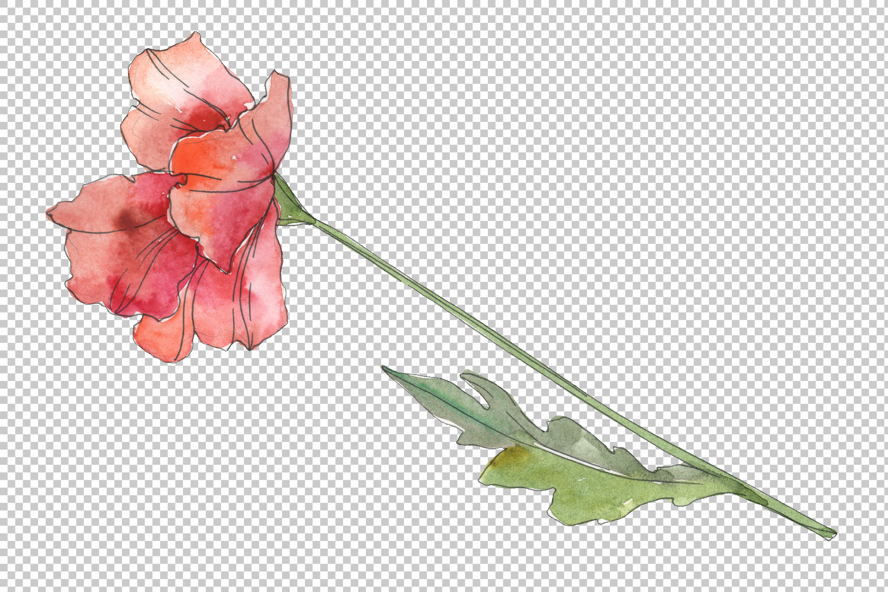Poppy red Watercolor png example image 4