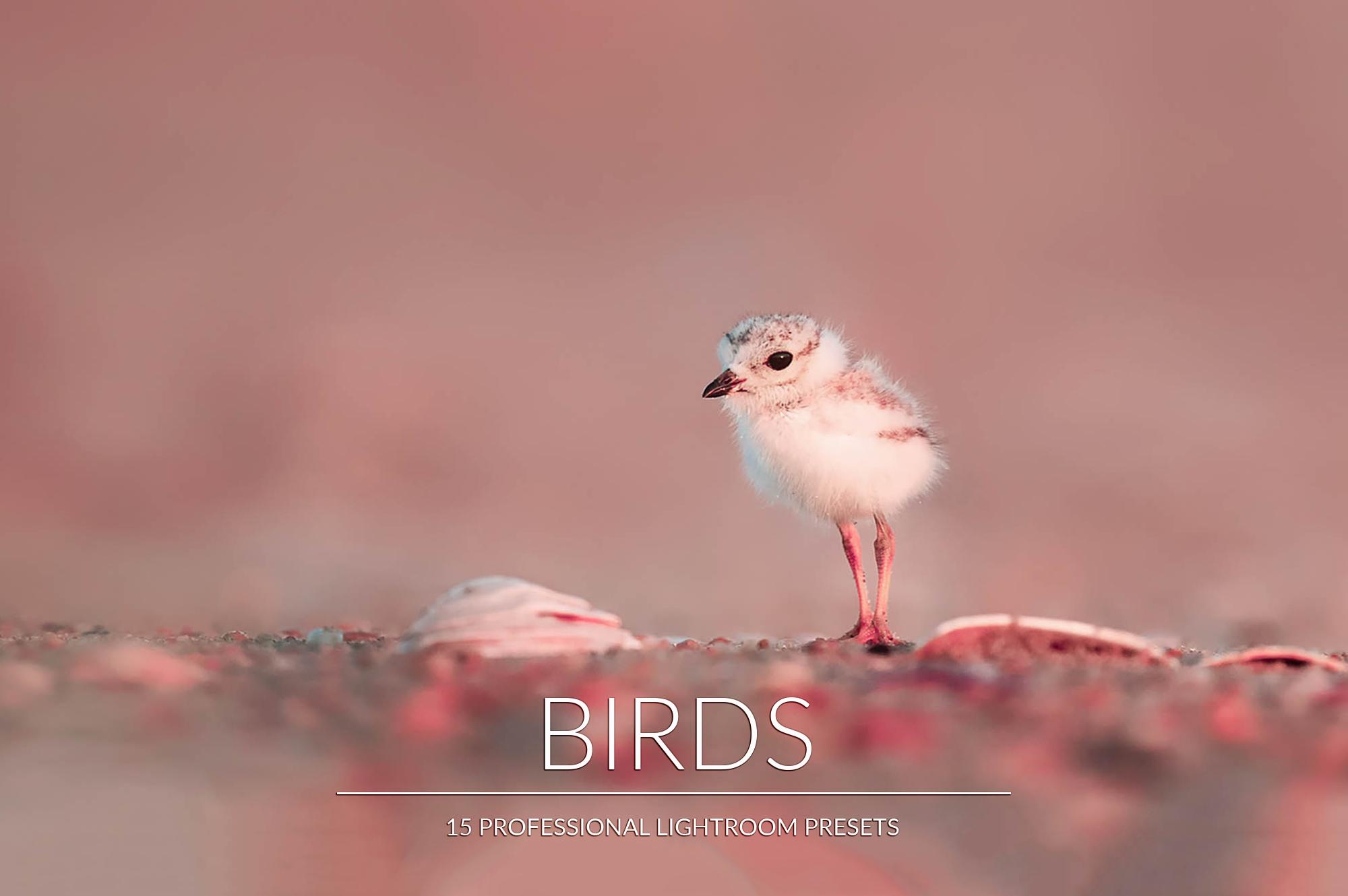 Birds Lr Presets example image 1