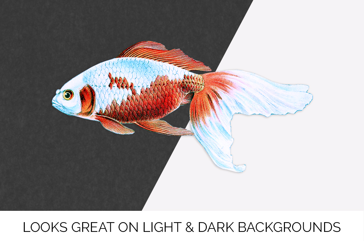 Fish - Vintage Fingertail Wakin Goldfish