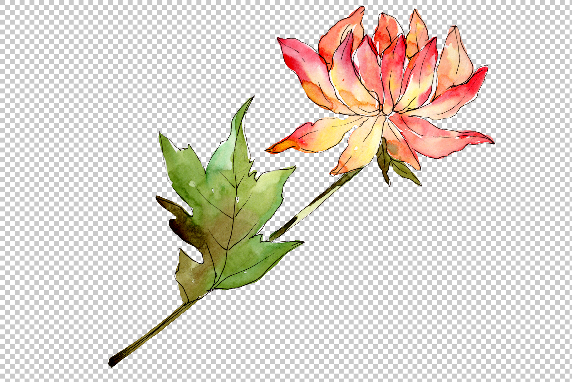 Delicate flower daisy watercolor png example image 3