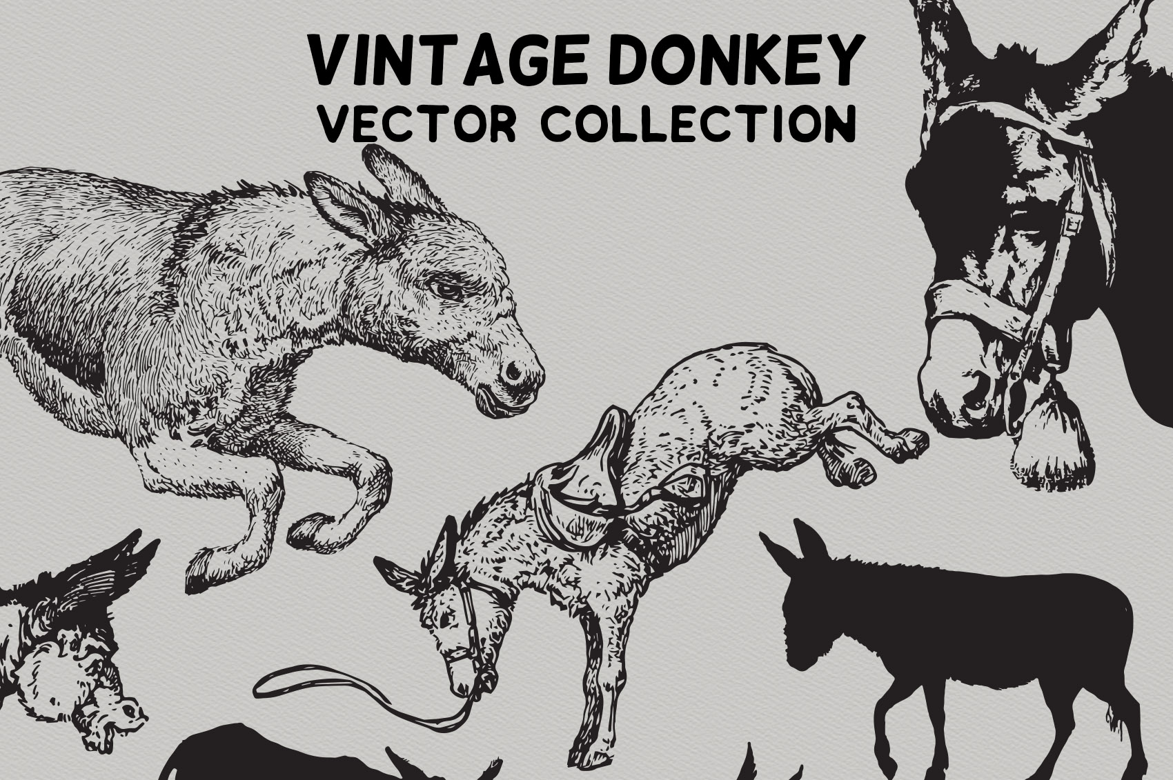 Vintage Donkeys Vector Collection example image 2