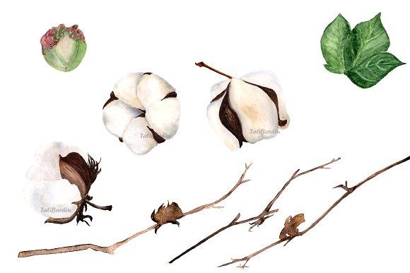 Watercolor Cotton Clip Art - Print example image 2