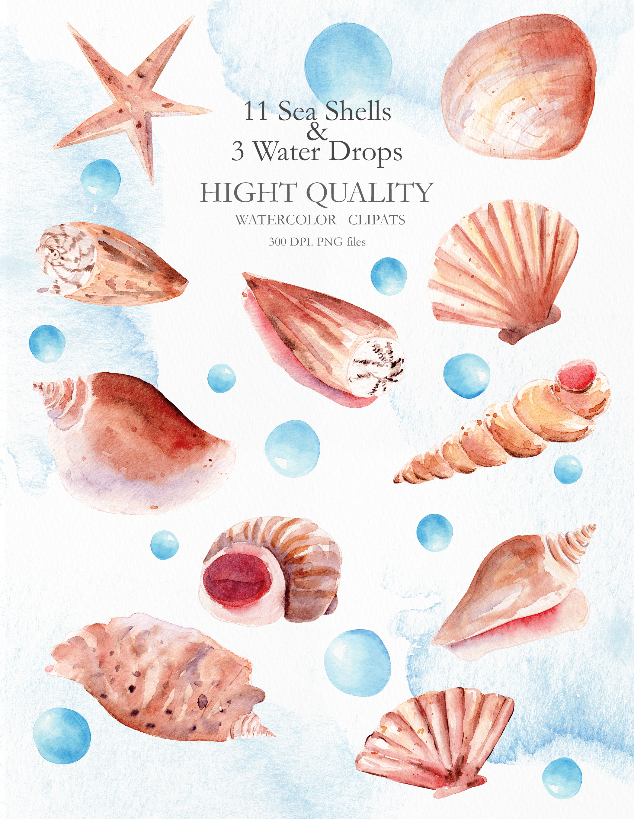 Seashells Clipart Collection example image 2