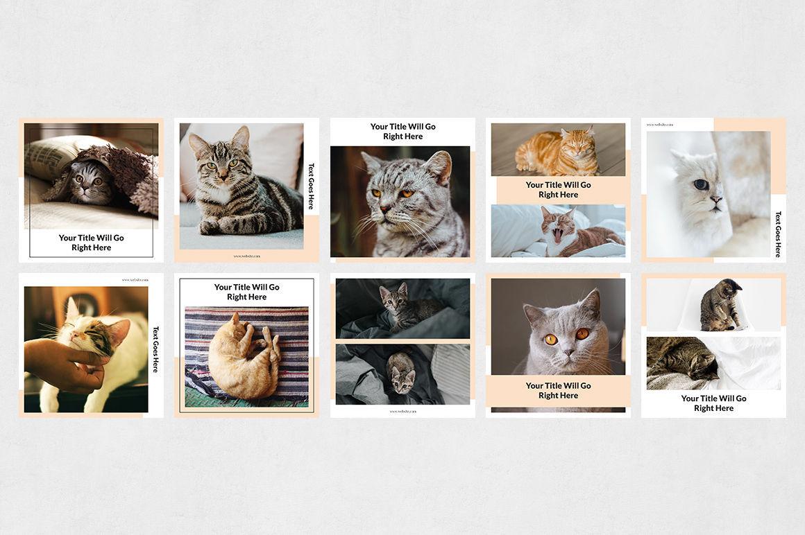 Cats Instagram Posts example image 7