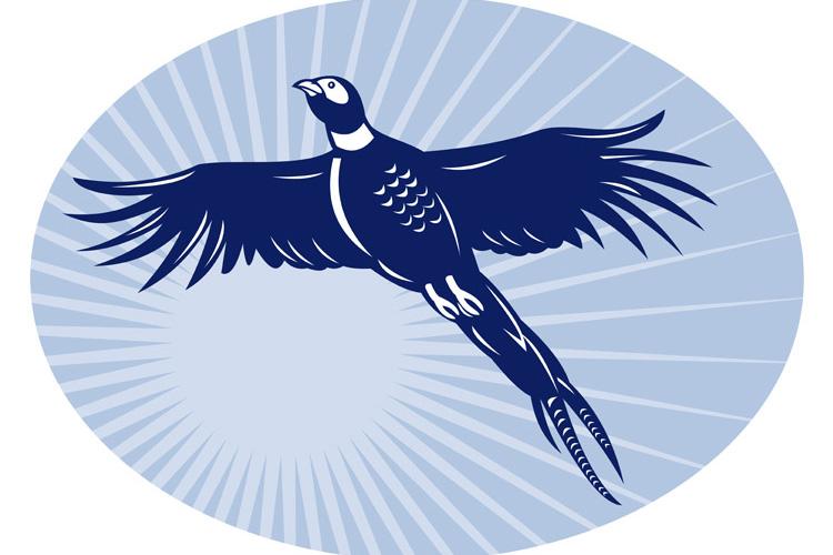Pheasant bird flying up example image 1