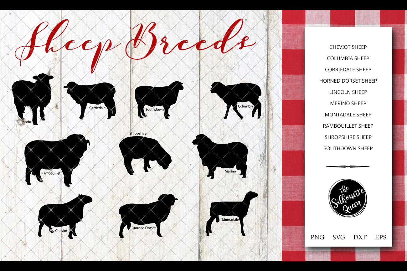Sheep Breeds Silhouette Vector svg file, sheep svg cut file example image 1
