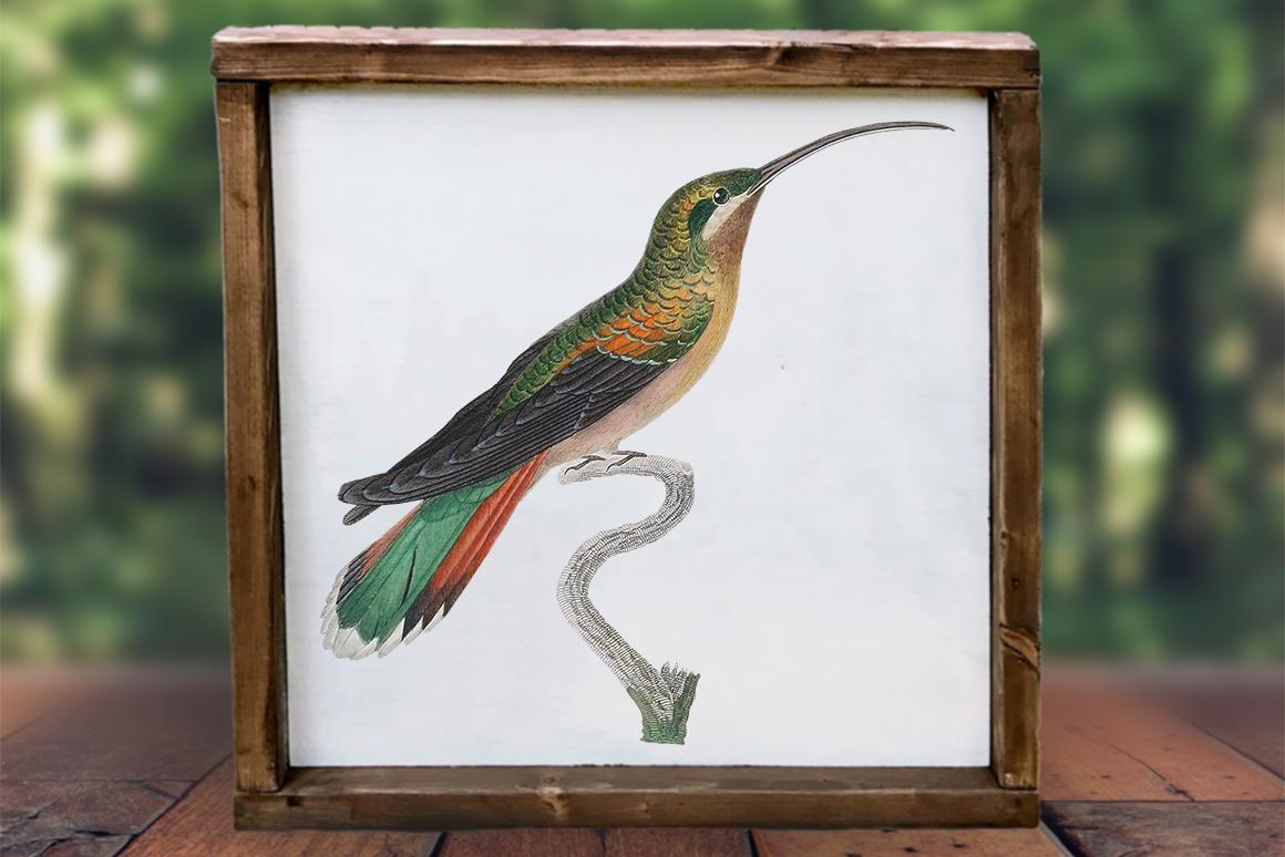 Hummingbird Bundle - Volume One - 20 Count - Humming Birds example image 4