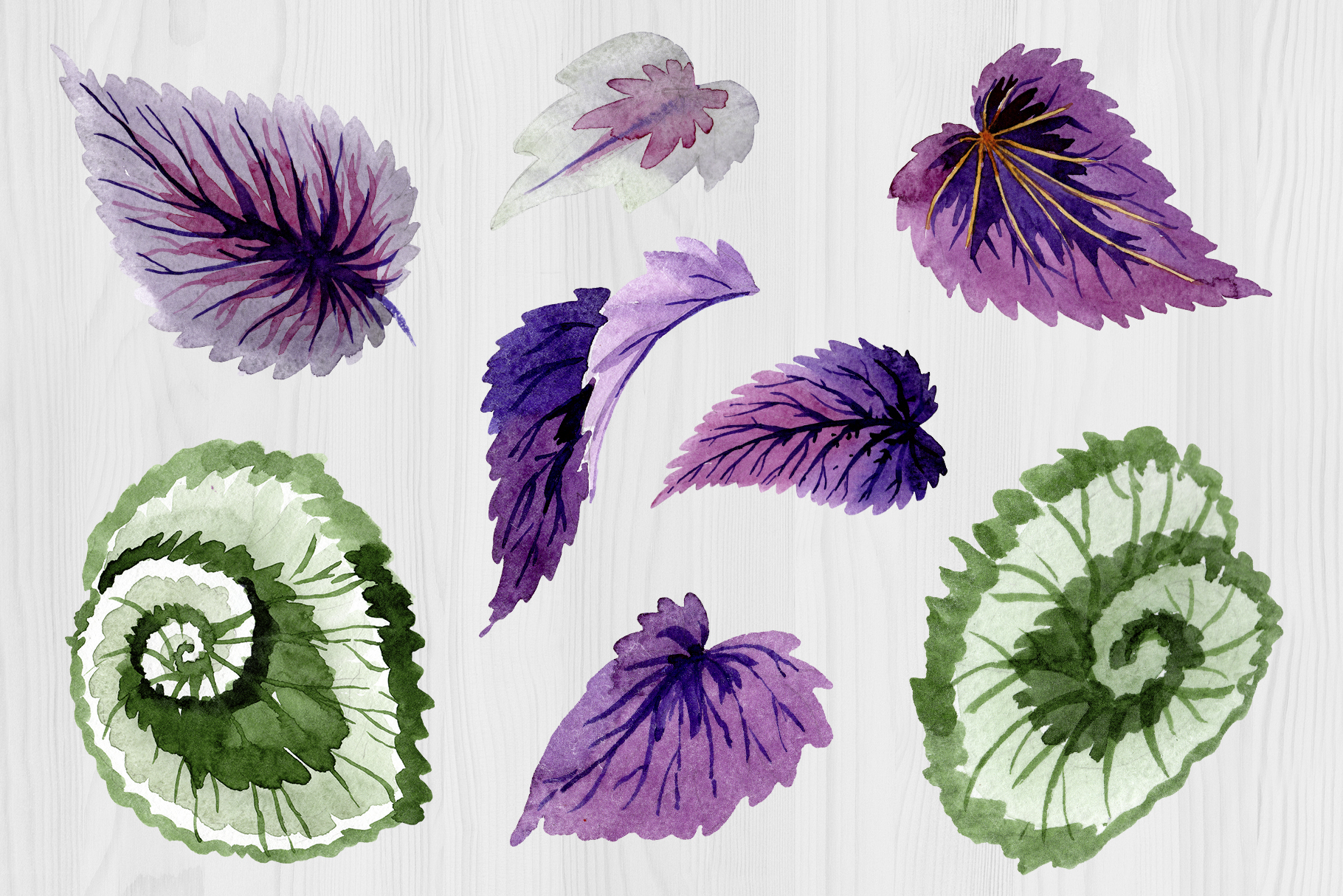 Decorative begonia purple watercolor png example image 2