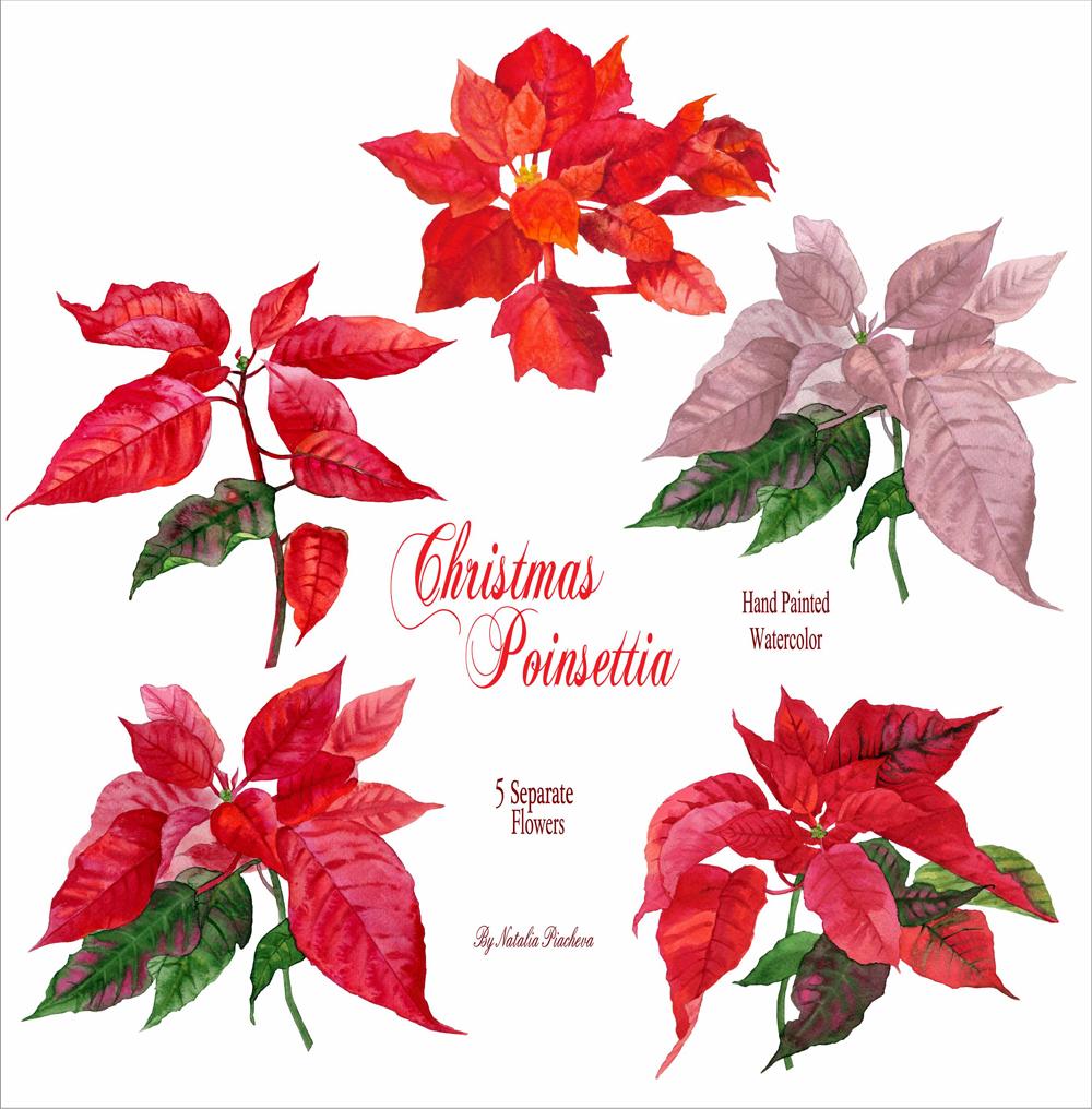 Christmas Poinsettia example image 2