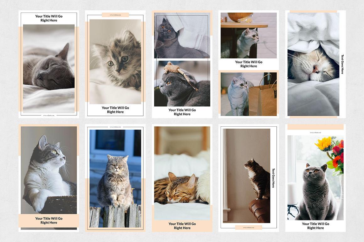 Cats Instagram Stories example image 8