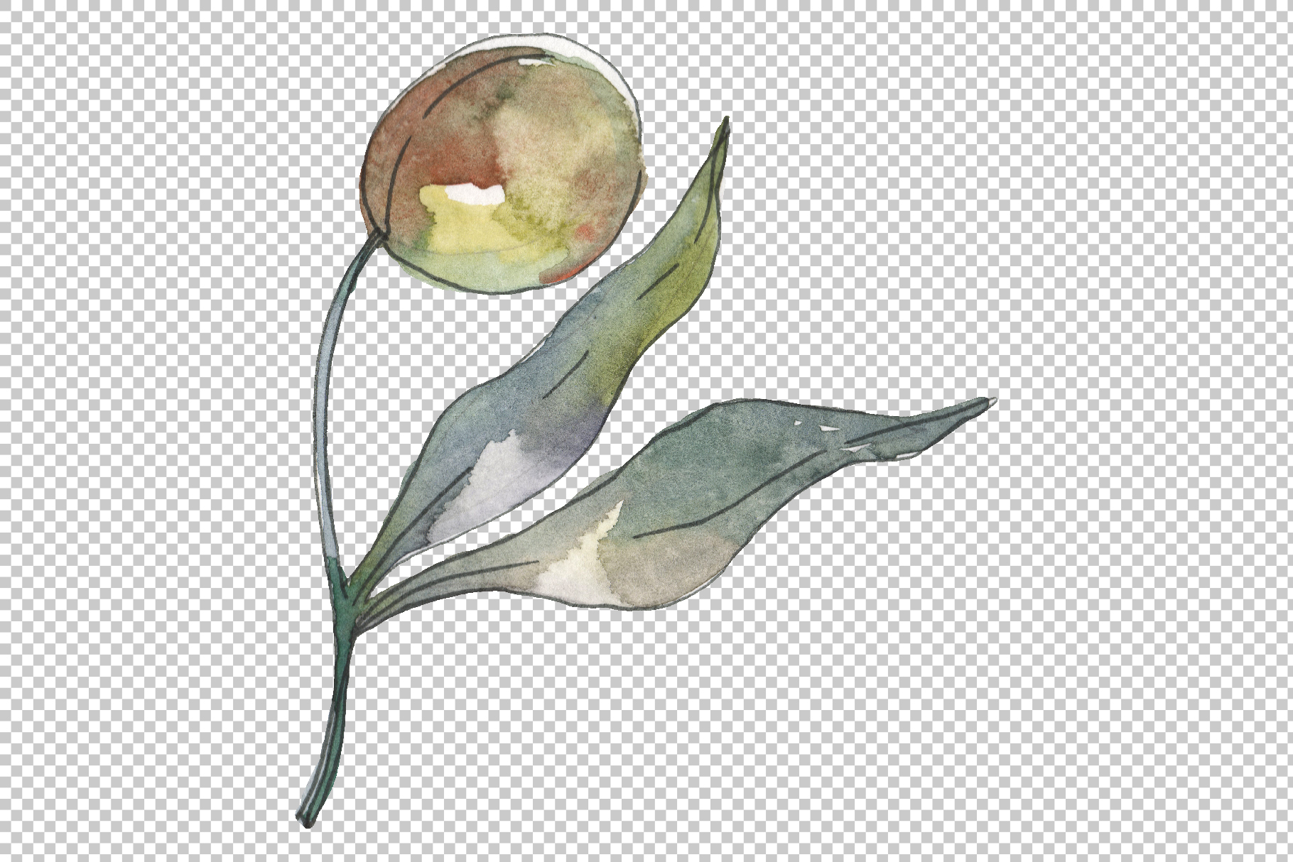 Olives Watercolor png example image 4