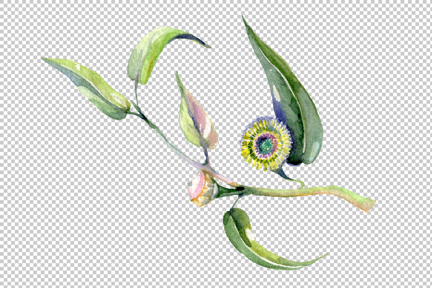 Eucalyptus Watercolor png example image 8