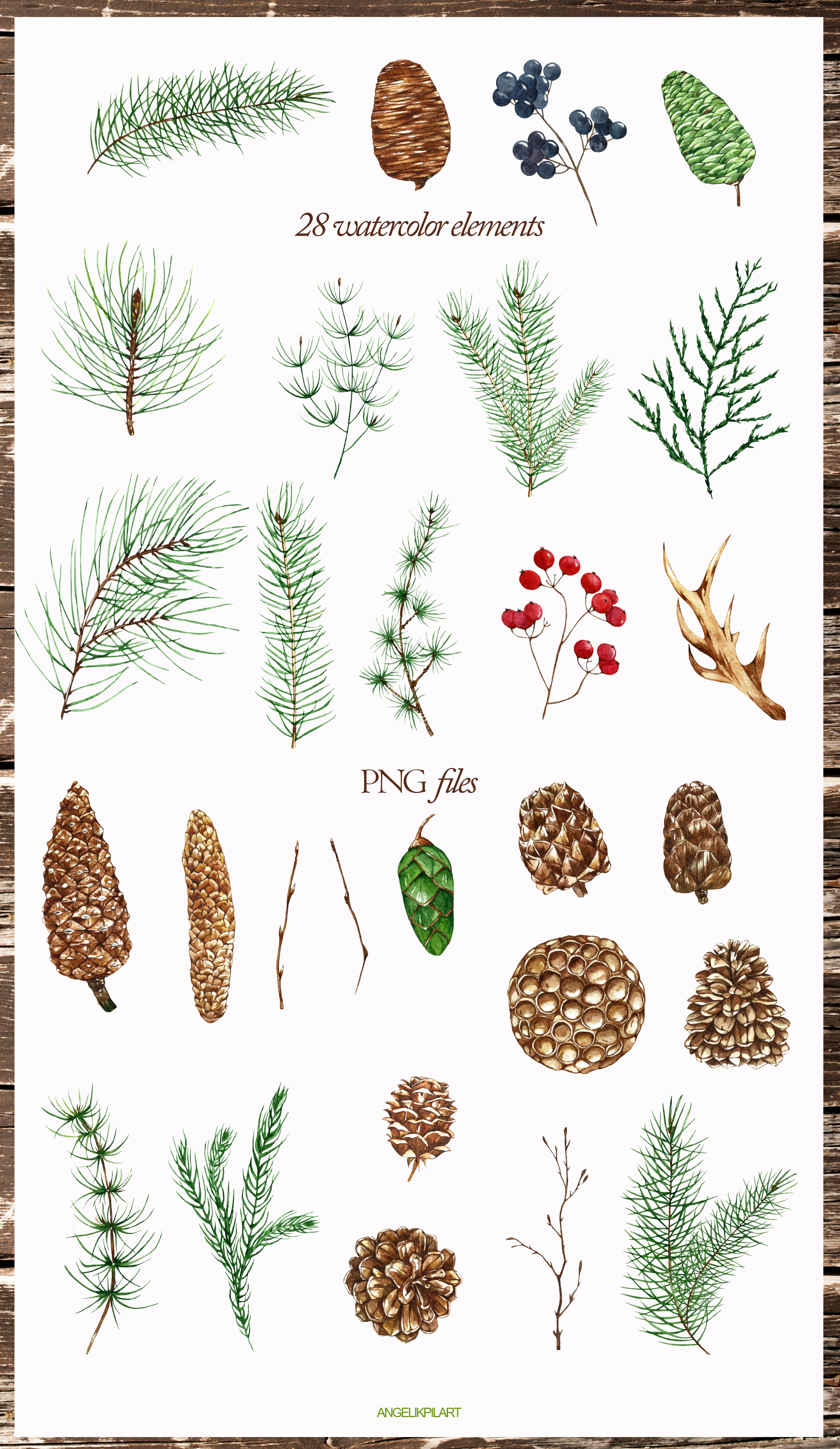 Conifers. Cones&Twigs watercolor example image 3