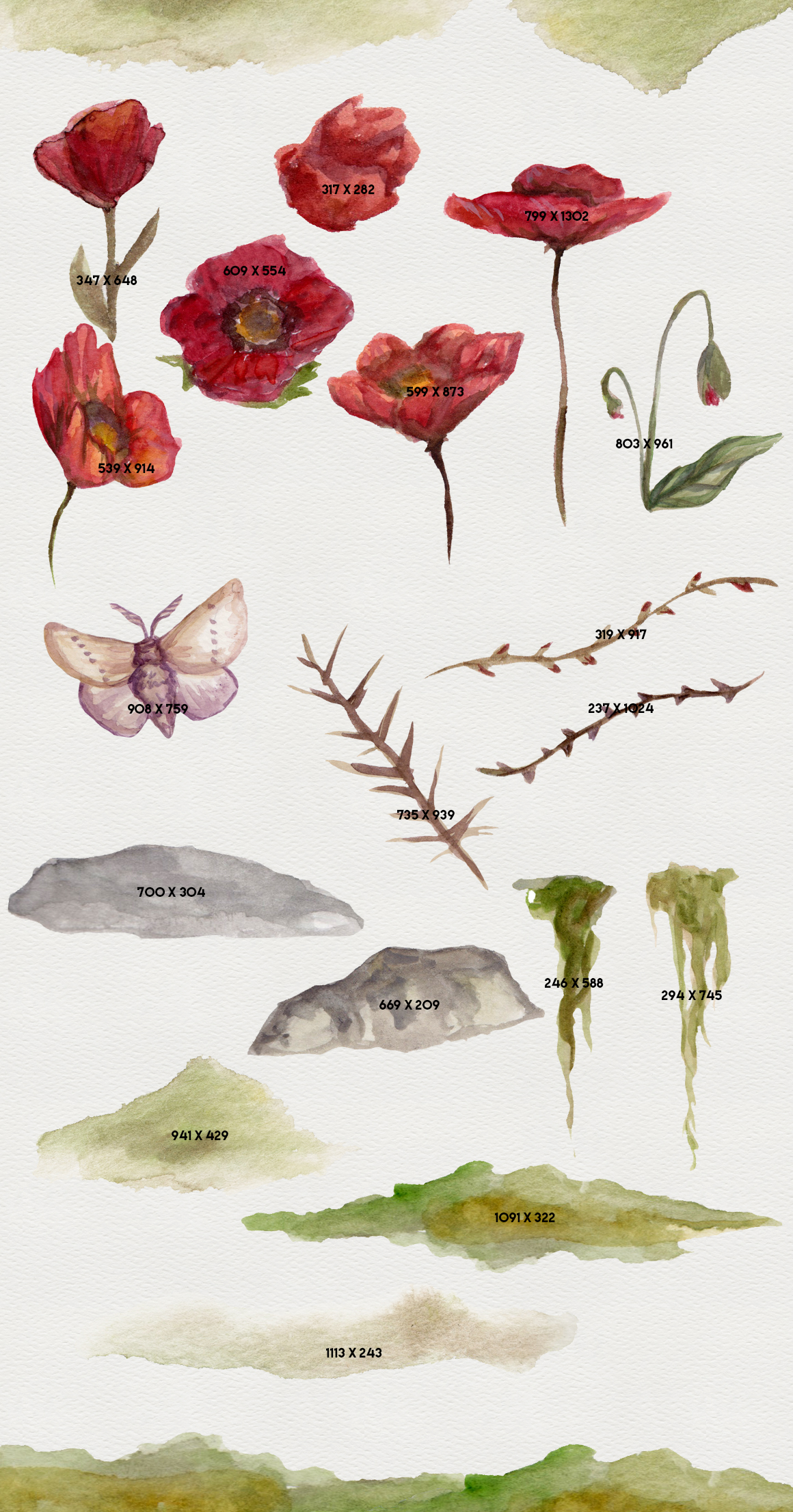 Natural Decay Watercolor Illustrations example image 4