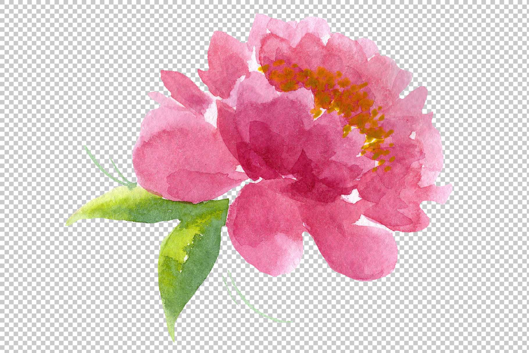 Delicate colorful peony PNG watercolor set example image 8
