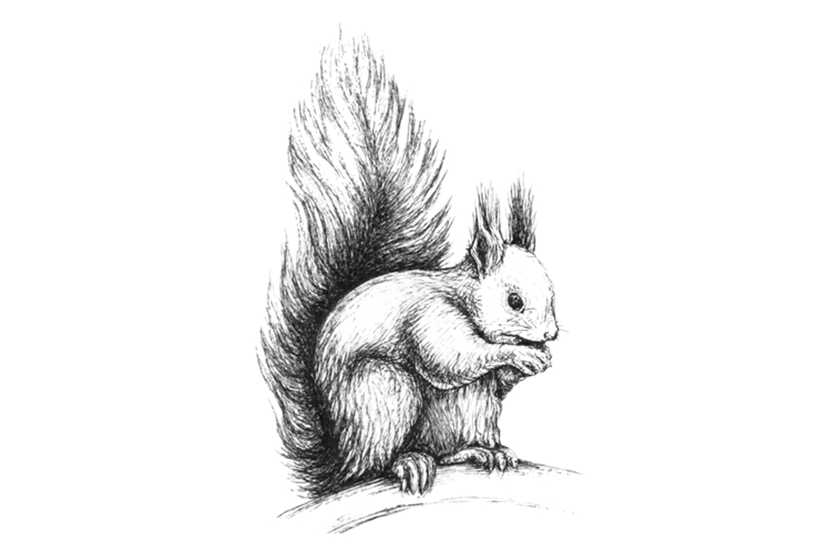 Hand drawn illustration with forest Squirrel example image 2