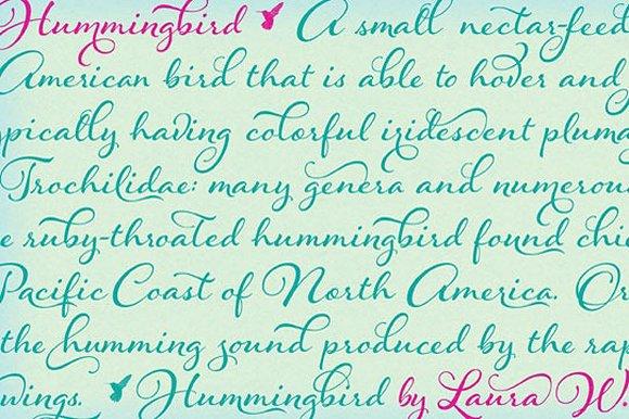 Hummingbird Bold example image 29