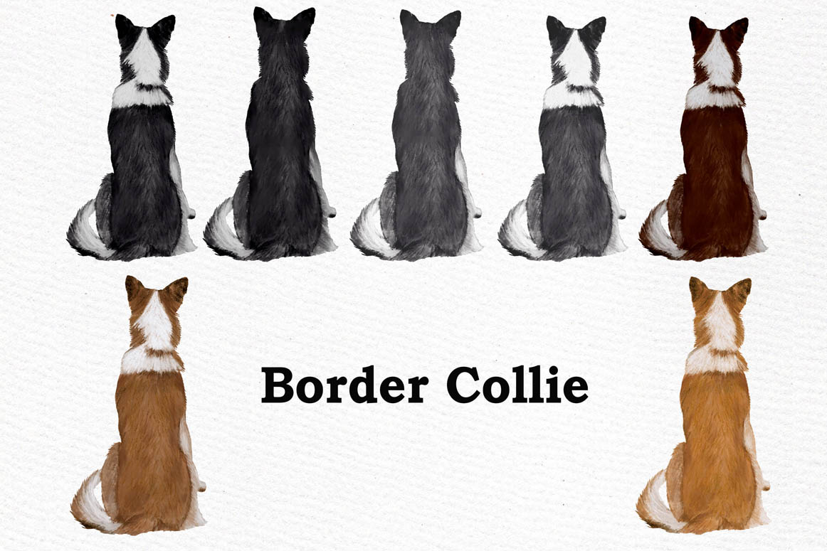 Dogs Clipart,Dog breeds Pet clipart,Watercolor dogs clipart example image 8