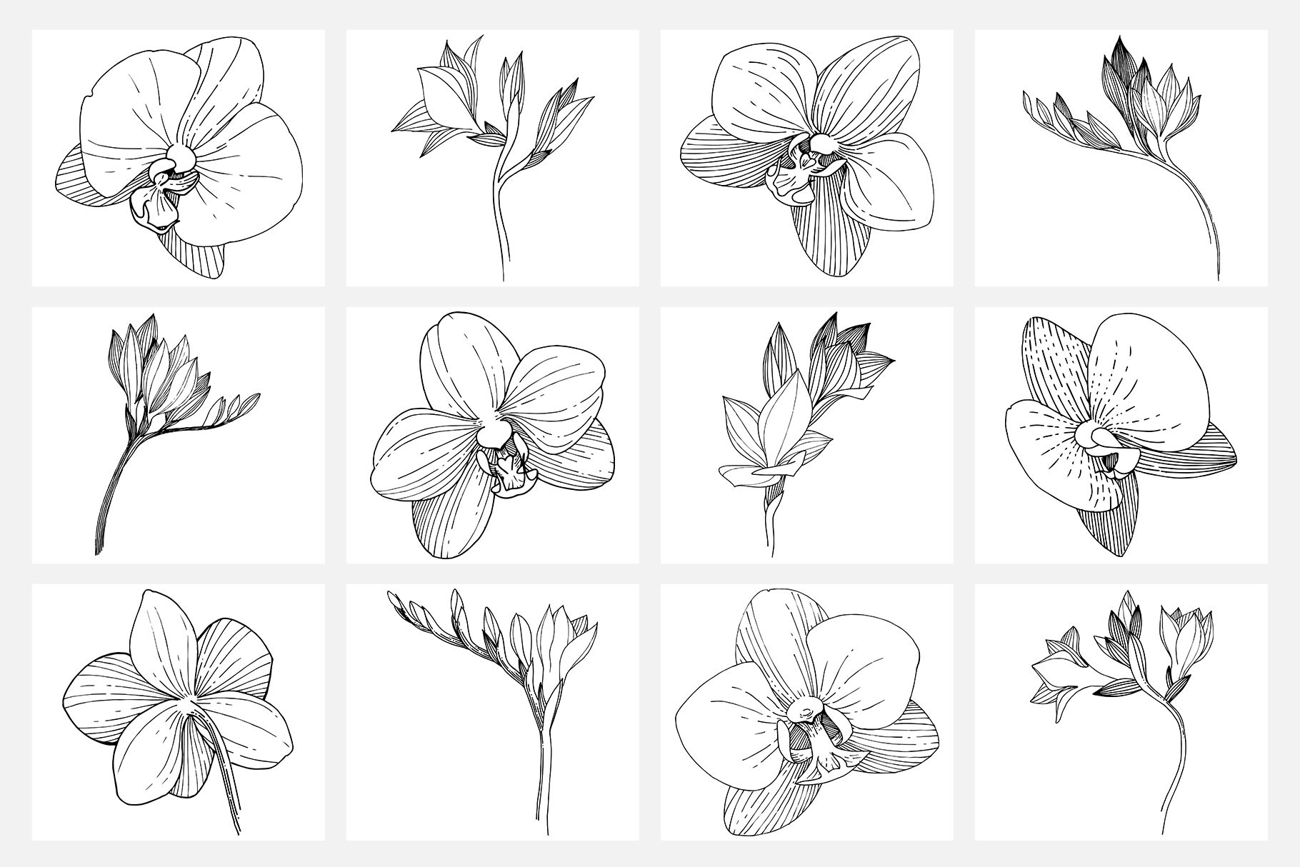 Vector illustration of Freesia flower watercolor png example image 9