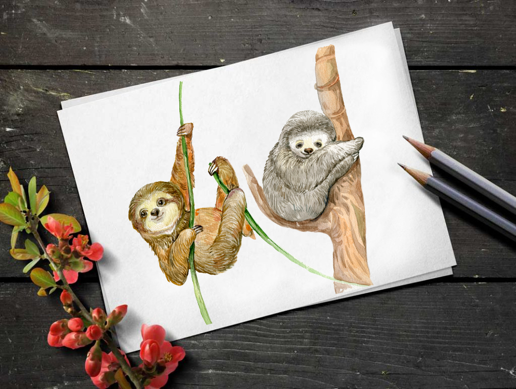 Sloth. Watercolor Clipart. example image 4