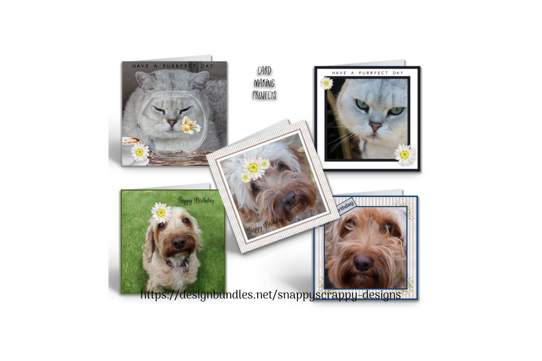 Animal Portrait Photographs example image 11