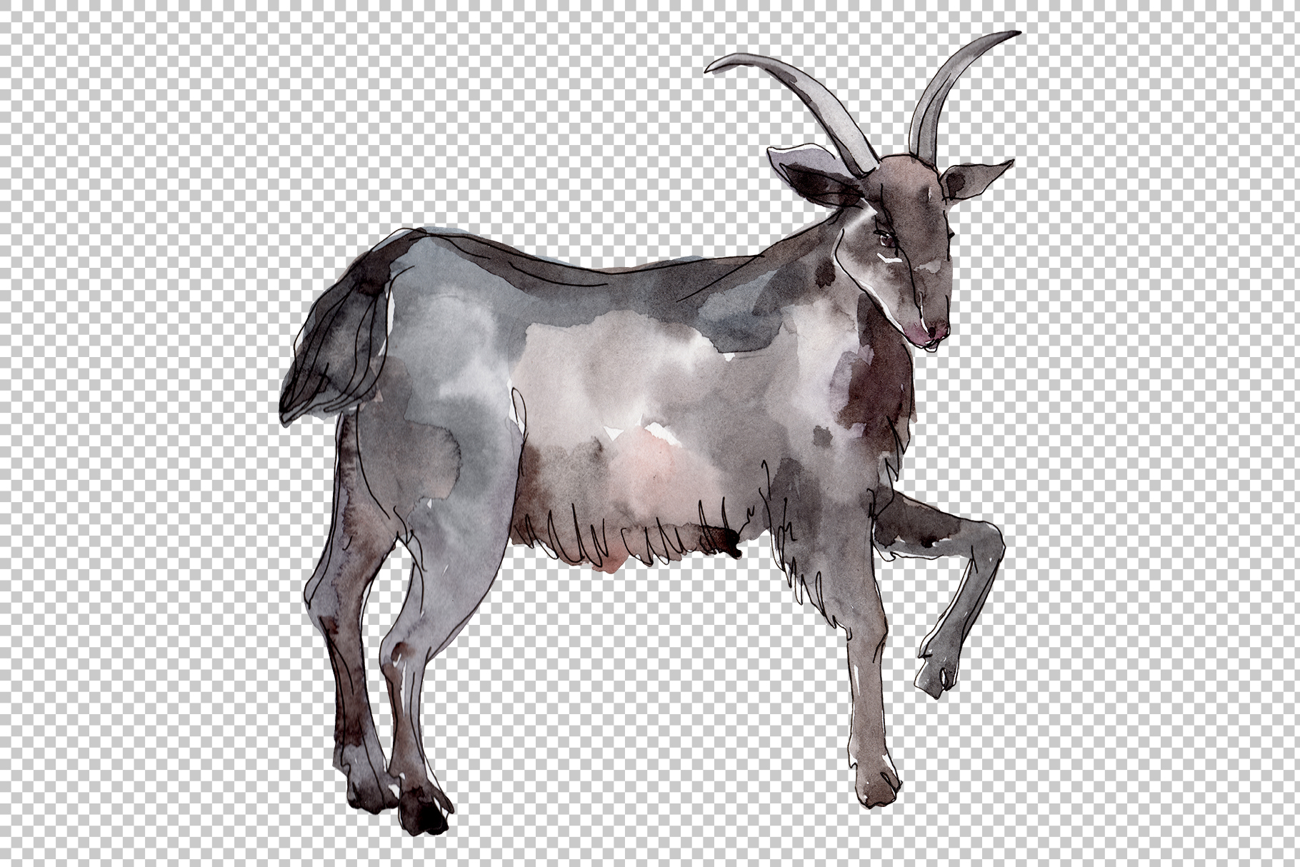 Farm animals Goat Watercolor png example image 2