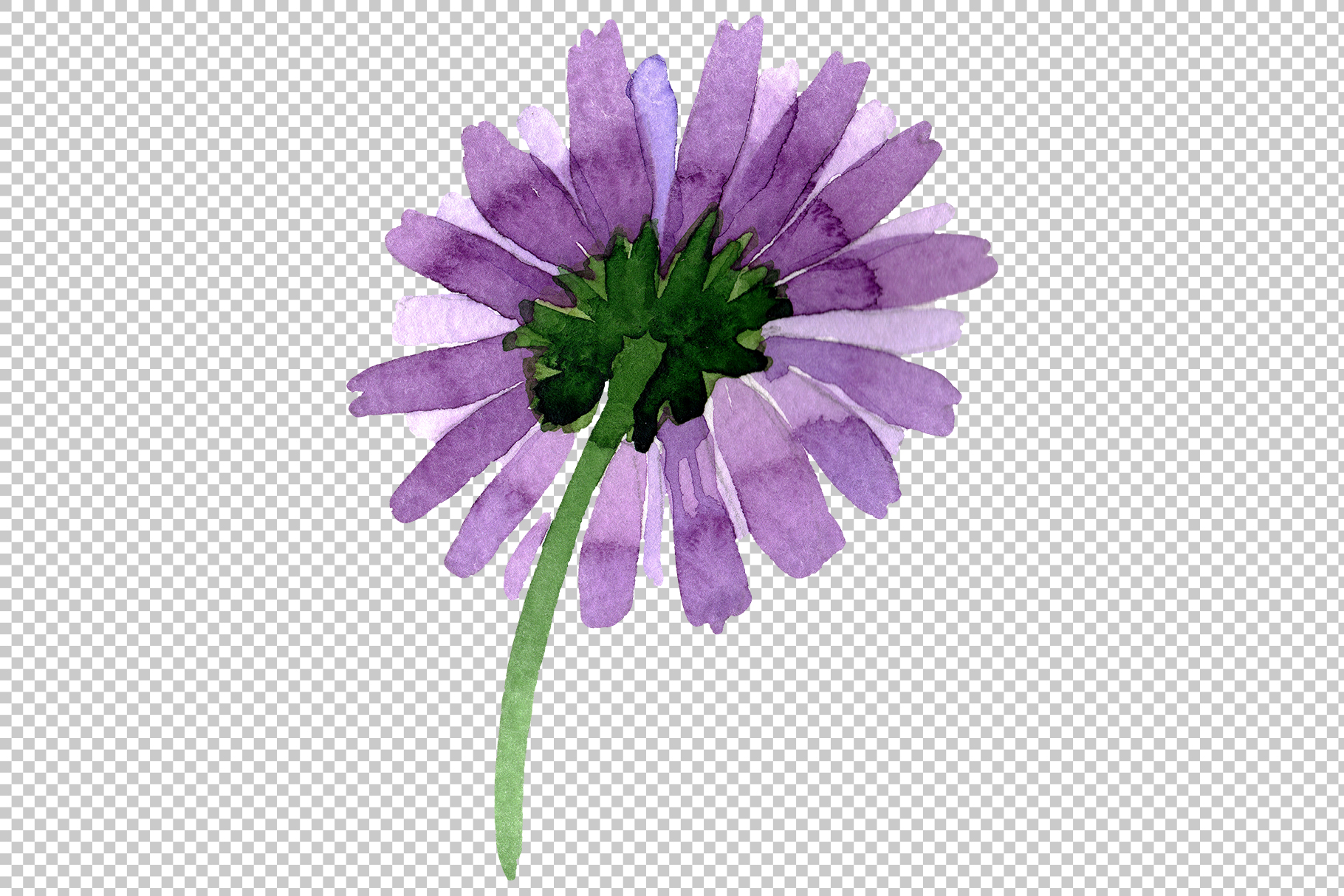 Asters Watercolor png example image 13